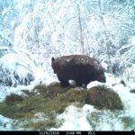 sask-black-bear-hunts-2019-27
