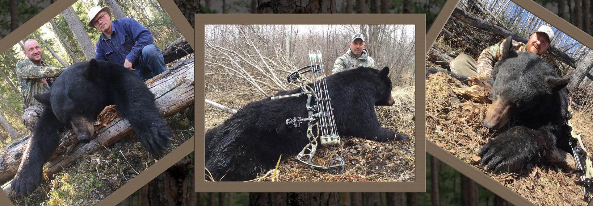 sk-black-bear-hunting