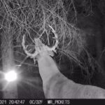 whitetail-trail-cam-2021-10-27-mr-pickets-2