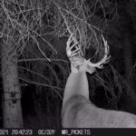 whitetail-trail-cam-2021-10-27-mr-pickets-3